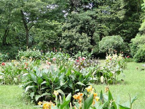 Indian Botanical Garden Great Banyan Tree Indian Botanic Garden Shibpur Howrah Picture Of Acharya Jagadish Chandra