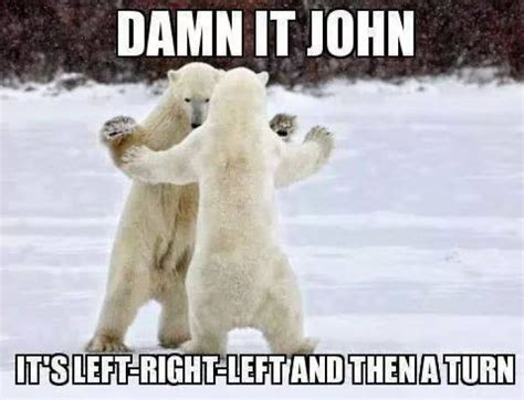 Dancing Polar Bear Meme - damn it john polarbear meme jokes memes pictures