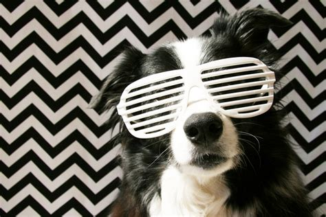 pets archives simple home diy ideas pretty fluffy