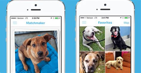 tinder for dogs there s now a tinder for dogs it s called barkbuddy bdcwire