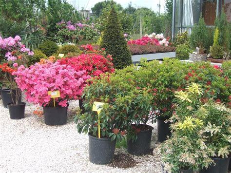 piante da giardino fiorite piante fiorite da esterno casette tettoie pergole in