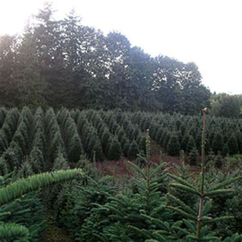 pine meadows tree farms ltd bc farm fresh
