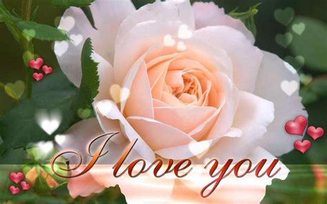 wallpaper flower love hd you with romantic music and youtube blue beautiful love