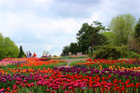 Spring At Minnesota Landscape Arboretum Experience The Flowers Gardens And Landscapes