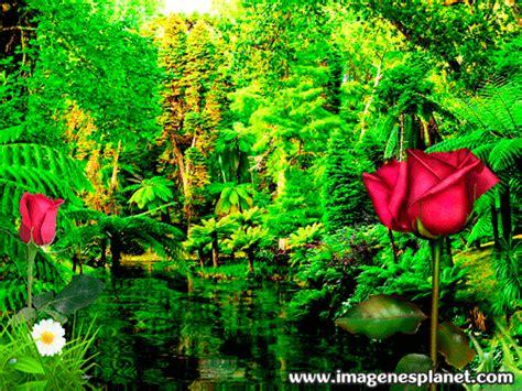 imagenes de jardines llenos de rosas imagenes mas bonitas de rosas con frases de amor