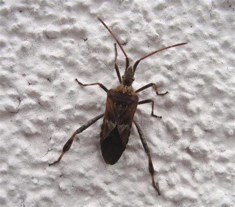 Wanzen Im Haus by Wer Kann Diese Wanze Bestimmen Insekten K 228 Fer