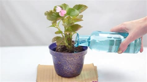 repot  plant  steps  pictures wikihow
