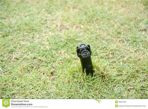 Mit Freundlichen Grã ã En Zeile Wasserspringer Auf Dem Boden Mit Gras Stockfoto Bild 39287428