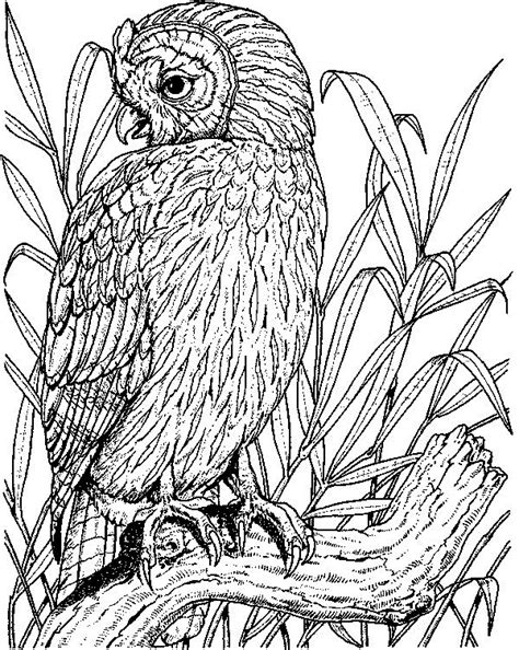 realistic owl coloring page owl cartoon drawings to color search results million