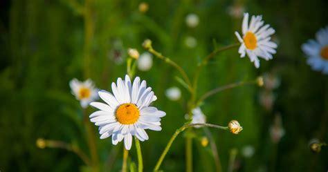 flora garten flora garten abo gartenflora abo bis 40 pr mie 5 rabatt