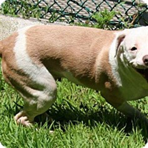 waterbury pound waterbury connecticut adopted dogs puppies cats and kittens for adoption from
