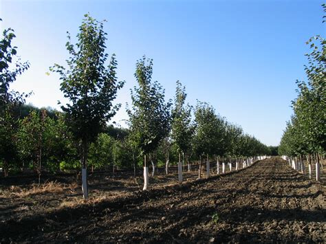 tree farms lakeshore tree farms your source for prairie hardy