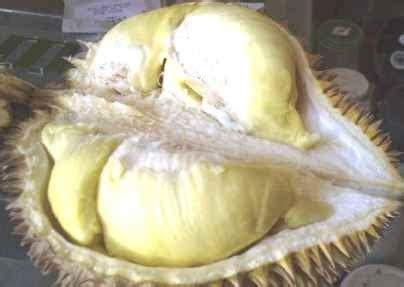 kandungan durian  berbahaya buat penderita diabetes