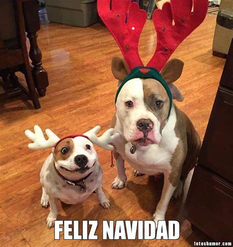 imagenes graciosas por navidad feliz navidad versi 243 n canina fotos de humor