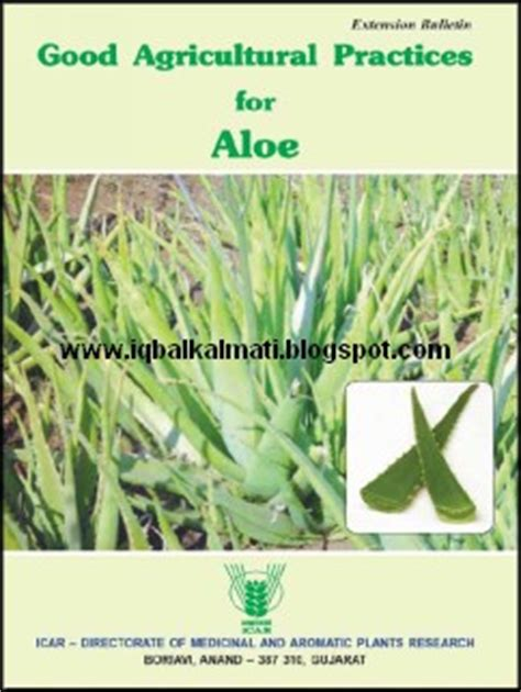 aloe vera plant facts aloe vera plant information uses and cultivation methods