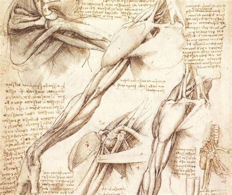 Drawing Human Anatomy by Leonardo Da Vinci Anatomy Sketches Images