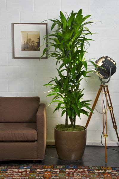 best plant for indoor low light 49 best office break room ideas images on pinterest