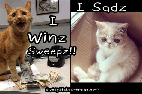 Difference Between Contest And Sweepstakes - i win sweepstakes smart cat meme sweeps maniac