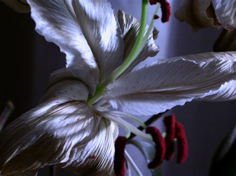 Flower Photography by Flower Photography Tips Flower Pressflower Press
