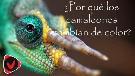 Imagenes Chidas Que Cambian De Color | 191 c 243 mo los camaleones cambian de color youtube