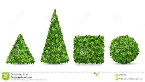 topiary forms for boxwood shrubs of different topiary forms stock vector