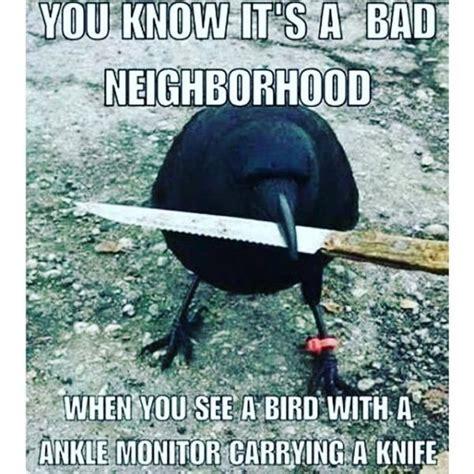 Crow Meme - 1000 ghetto quotes on pinterest funny ghetto quotes