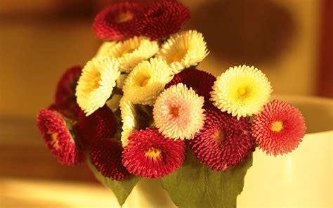 for flowers flower bokeh wallpaper 1920x1200 30094