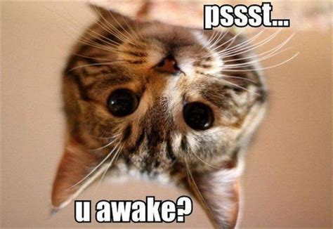 Very Funny Cat Photos 2 Desktop Wallpaper Funnypicture Org