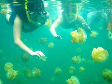 Tidung Island Diving Trip dive derawan maratua kakaban sangalaki 171 snorkeling 171 indonesia