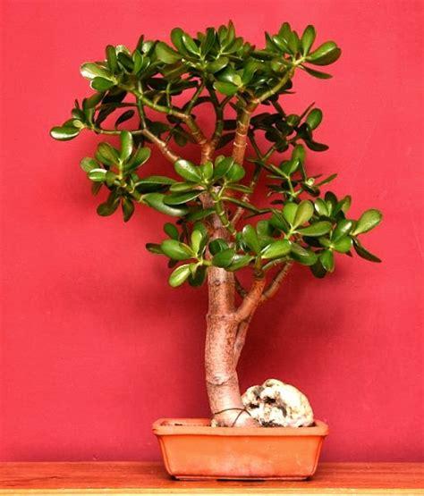 5 big and beautiful indoor plants flower power article cosmos top five most beautiful indoor plants