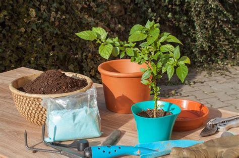 coltivare ortaggi in vaso orto sul balcone come coltivare in vaso orto da coltivare