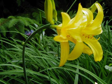 Gelbe Pilze Im Garten by Gelbe Blume Im Garten Foto Bild Pflanzen Pilze
