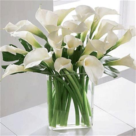 fiori calle bianche consegna fiori a domicilio omaggi floreali vendita on line