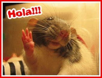 imagenes gif online hola mensajes tarjetas y im 225 genes con hola para orkut