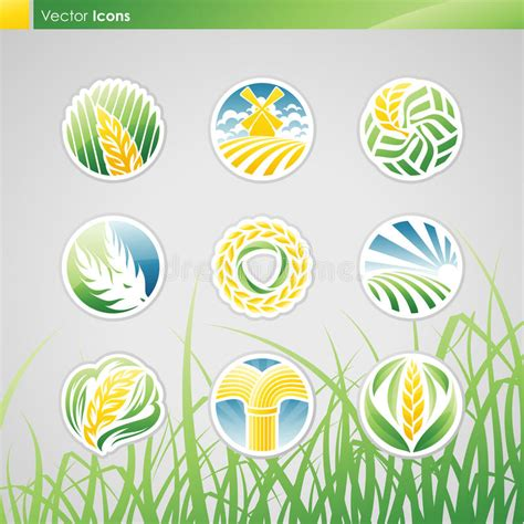 set of vector graphic elements royalty free stock photos wheat and rye vector logo template set royalty free