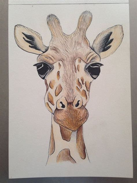 doodle viewer 25 best ideas about giraffe drawing on
