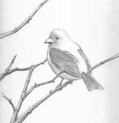 easy bird pencil drawings images