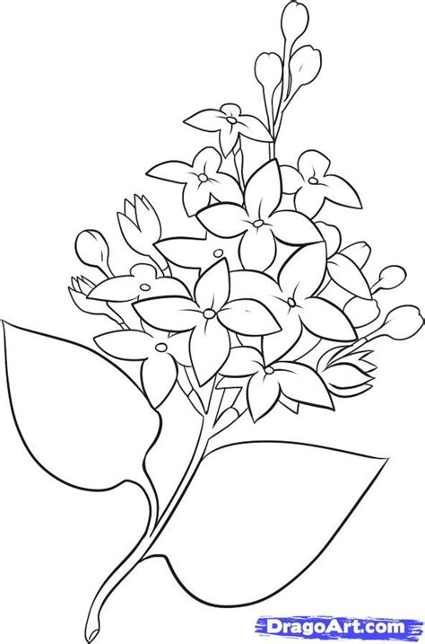 how to draw lilacs step by step flowers pop culture