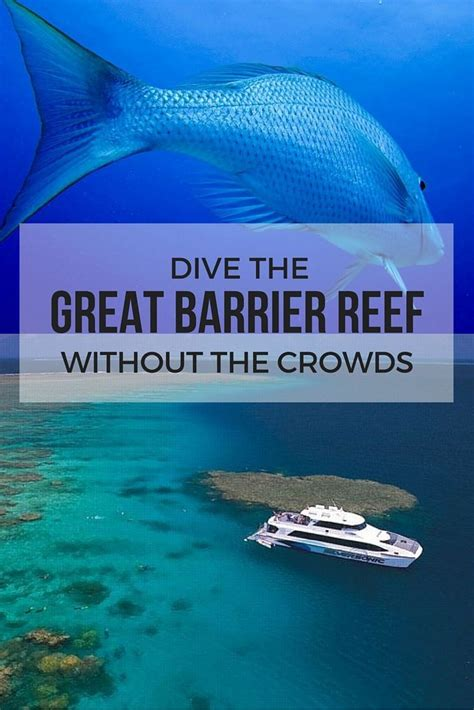 best place to dive the great barrier reef 25 best ideas about great barrier reef diving on