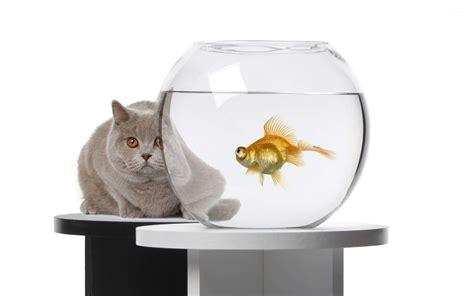 cat under wallpaper cat hiding behind a fishbowl wallpaper animal wallpapers