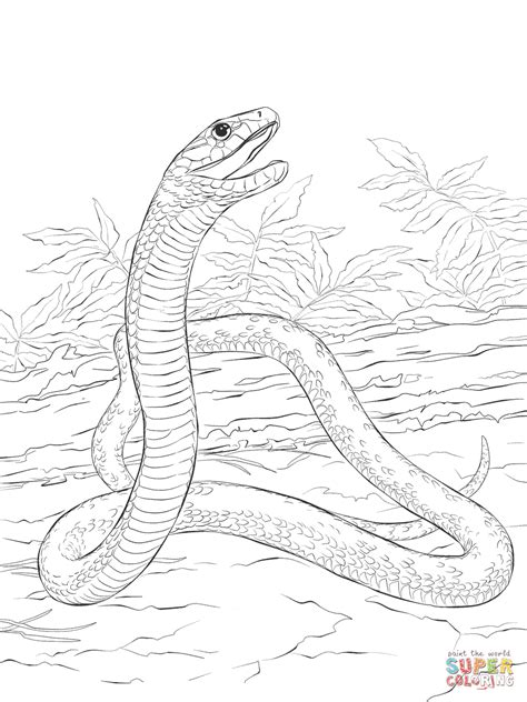 Black Mamba Coloring Pages black mamba coloring page free printable coloring pages