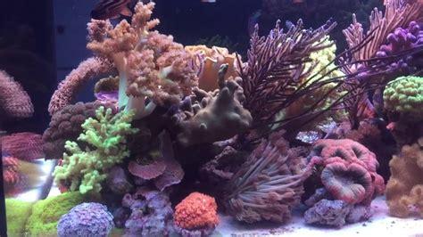 Soft Aquarium soft coral reef tank