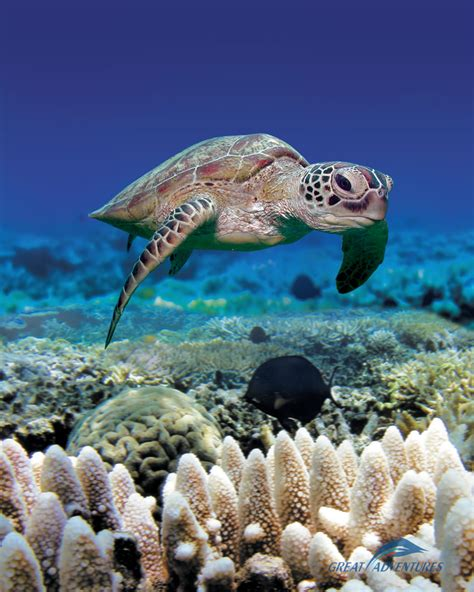 Reef Escape Coffee Reef explore the outer barrier reef with great adventures
