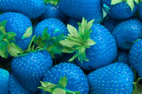 1000 images about blue food on pinterest blue food