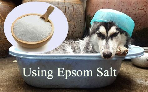 epsom salt for dogs top 10 home remedies for allergies