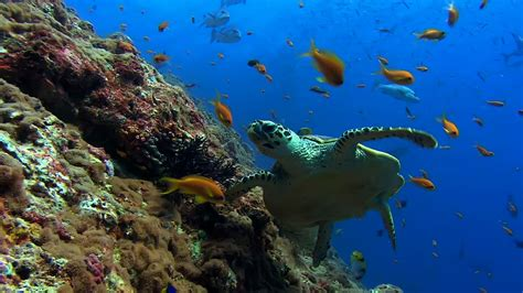 sea turtle live wallpaper free wallpaper live wallpapers and screensavers
