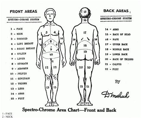 diagram of pressure points on the human pressure points human diagram anatomy organ