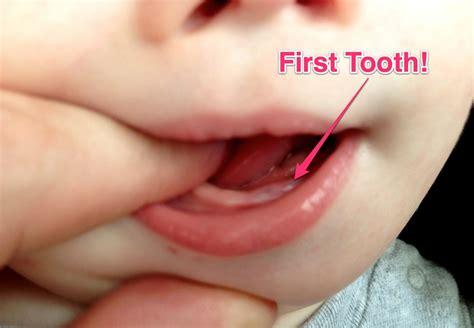 baby teeth babys tooth myideasbedroom