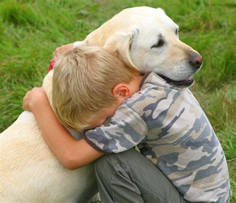 dogs that help with anxiety revitalize counseling services dogs can help get rid of anxiety depression and stress