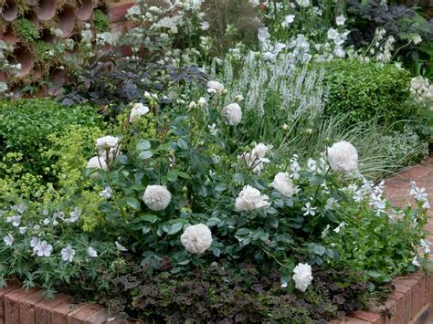 White Garden Flowers Plant A And Perennial Garden Hgtv